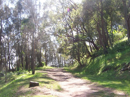 Araluen Drive track from Pretty Beach to Hardys Bay