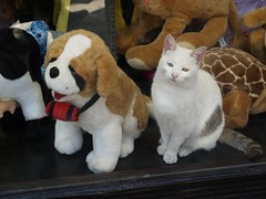 Cat and Stuffed Dog