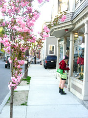 Wickenden Street (Mixxie Sixty Seven) Tags: street city pink urban tree nature girl fashion blossoms ivy providence rhodeisland punky windowshopper wickendenst punkygirl