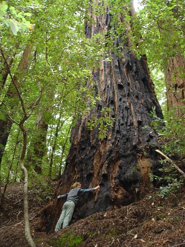 Tree Hugger by Shayan (USA).