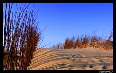 Dunes_2 (PeteFriday) Tags: sea netherlands lumix sand dunes dune northsea fz7 backwood pdpnw petefriday