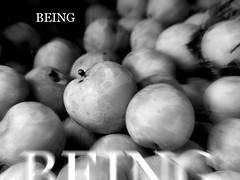 Being. (CyboRoZ) Tags: fruit being ser sein zijn etre essere existir existance esistere