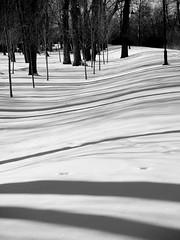 Lightplay (hobo4hire) Tags: park trees winter shadow bw snow cold tree calgary lines stripes olympus alberta linear princesislandpark e500