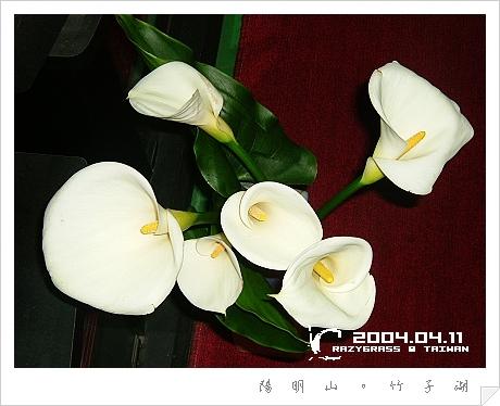 2004_0411Image0081