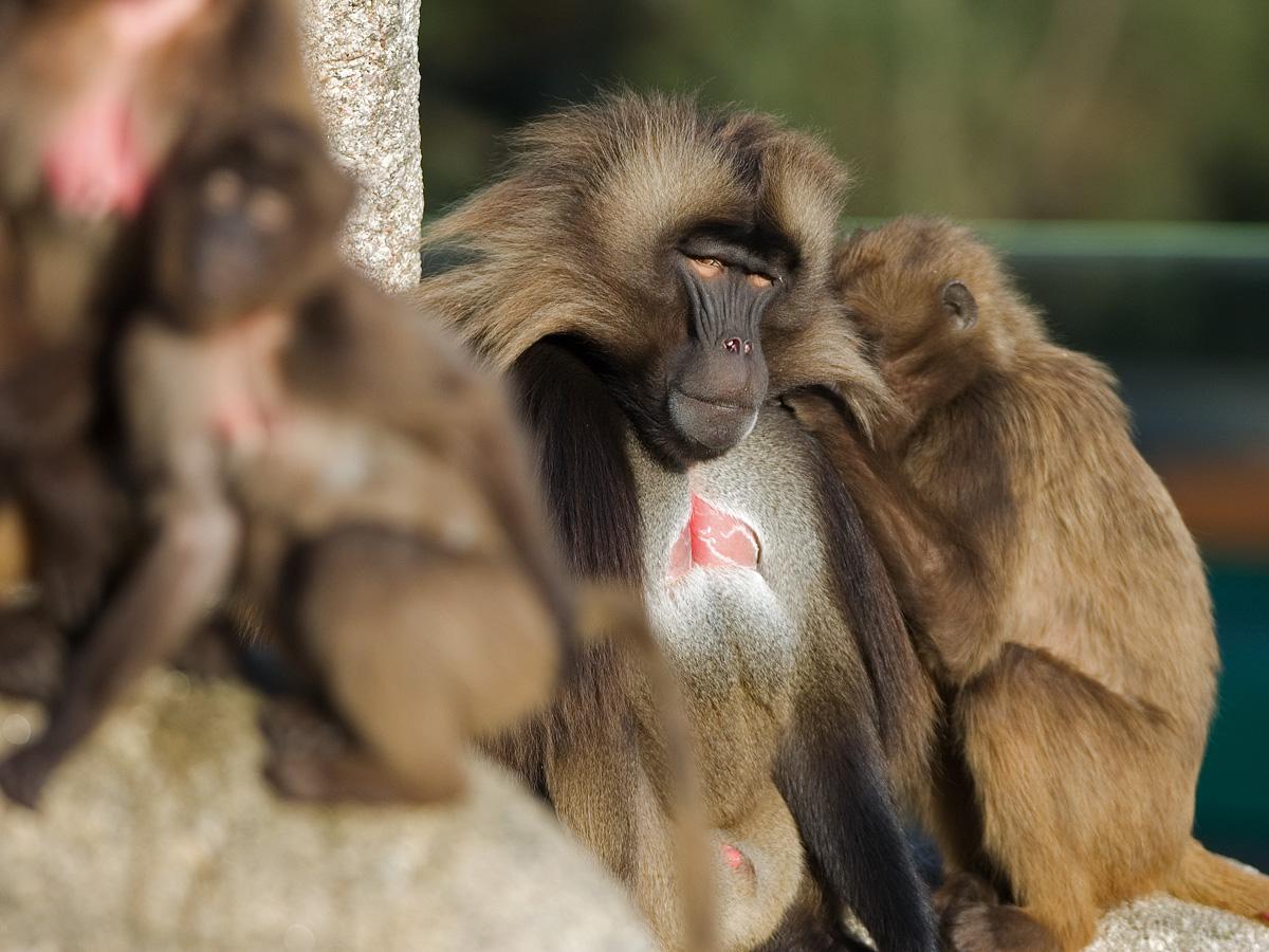 порно фото блондинки обезьяны