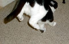 binky.im.outta.here (axiom_driver_1969) Tags: cats silly cute cat hilarious jump paw kitten funny kitty cutie kitties cutecat cutekitten actioncat