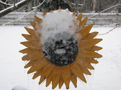 Frozen sunflower chickadee box