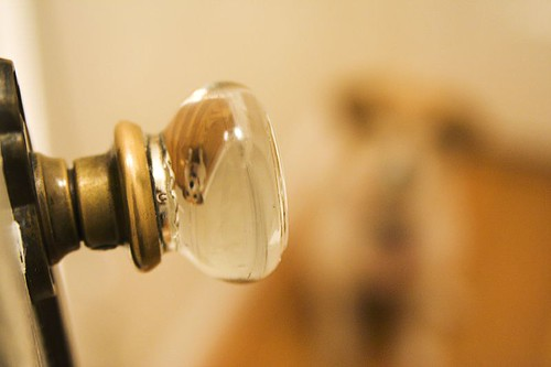 the doggy in the doorknob