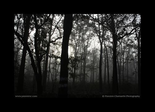 Woods - Malnadu