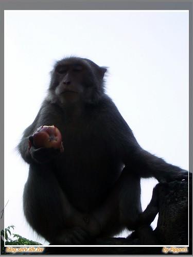烏山、彌猴、鋼管雞 - 05