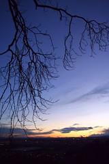 purple sunset (! .  Angela Lobefaro . !) Tags: trip travel sunset vacation italy holiday tree castle love nature beautiful architecture countryside interestingness firefox pretty tramonto quality patterns c
