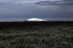 Fjall (thengillb) Tags: iceland glacier italians holidaysvacanzeurlaub arctickite earthlife