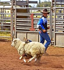 Child Bustin' (Bill Adams) Tags: sports hawaii cowboy waimea rodeo bigisland mutton kamuela paniolo parkerranch kamaaina muttonbusting nhn canonef70200mmf28lisusm keikirodeo keikibustin