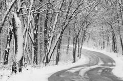 "A higher resolution crop from ""February Woods"" (Mingfong) Tags: blackandwhite bw white snow monochrome snowy story madison albumcover stories 雪 黑白 藝術照 白色 白 桌布 雪地 寒冷 mingfong 風景攝影 黑白攝影 musicflyer 風景桌布 mingfongjan 雪國 雪白 artbrochure 雪日 sketchoflight mingfongphotography 黑白風景攝影 白色桌布 黑白桌布"