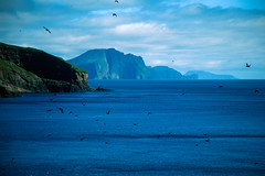 Vita nel cielo (supersky77) Tags: sky birds puffins faroeislands faroe faroes mykines unature somethingblueinmylife