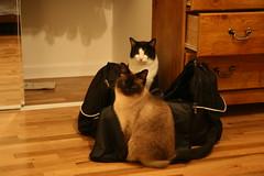 IMG_4501 (rwike77) Tags: cats digitalrebelxti