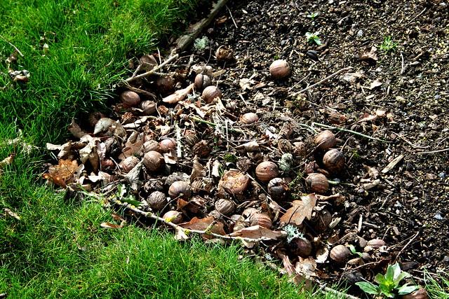 Dead Seeds