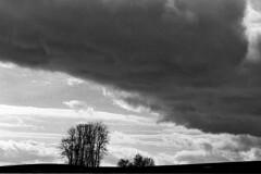 Before the storm (photoriel) Tags: winter sky bw storm tree nature clouds landscape switzerland europe land blackdiamond vaud penthalaz abigfave blackwhiteaward goldstaraward neroamet