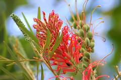 Natureza I (Boarin) Tags: flores folhas natureza frutos abelhas
