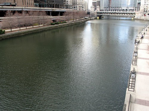 The Dye-ing of the Chicago River 1