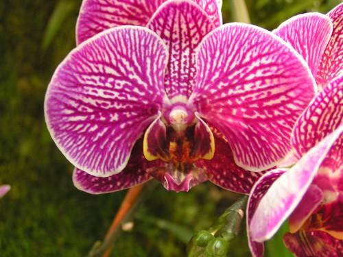 orchids10