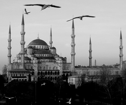 Istanbul Birds in Flight by Oberazzi.