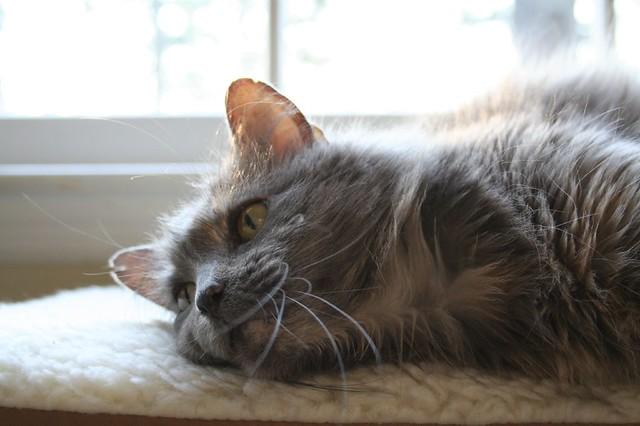 Psyche Cat