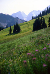 Alpine Meadows (justb) Tags: mountains meadow meadows alpine wildflowers guessed flickrsbest specnature whereamiinbc impressedbeauty