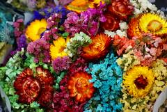 Felicidades (Jesus Guzman-Moya) Tags: flowers flores mxico mexico mam puebla chuchogm abigfave sonydslra100 jessguzmnmoya abiigfave cumpleaosmam