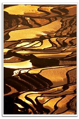 Landscape - Yunnan China (AhRay) Tags: china travel reflection water landscape gold golden pattern rice terrace explore  paddyfield  riceterrace   naturesfinest 2000views   terracedfield    ahray