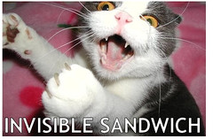 why the internet was really invented: catz! (petit hiboux) Tags: hilarious notmyphoto invisiblesandwich internetcatz