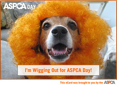ASPCA Day