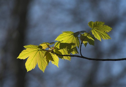 Light and leaves - Harting