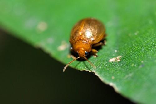 Cute beetle