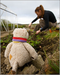 2007-04-09  Allotment Stawberry Bed  016  copy