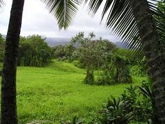 Maui Jungle