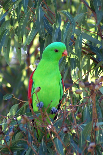 458141628 2e47a206ec صور جميلة عن الطبيعة والطيور