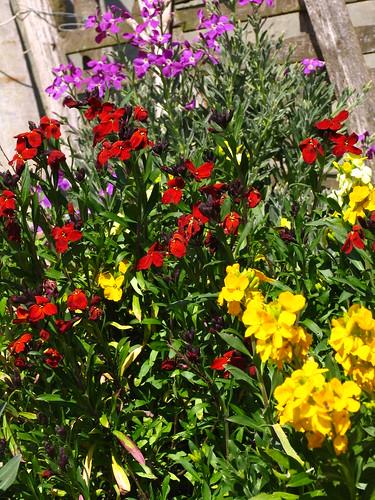 Rosso, giallo e viola