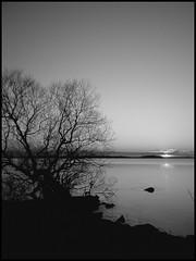 Colourless (Kirsten M Lentoft) Tags: sunset bw lake tree denmark supershot abigfave arresø momse2600 diamondclassphotographer flickrdiamond kirstenmlentoft