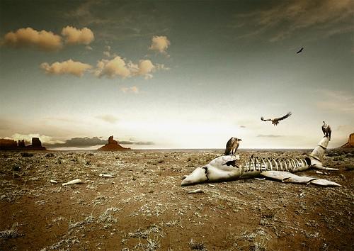avion buitre restos