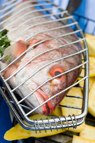 Caged red snapper