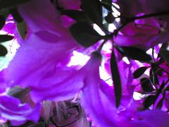 VOYEUR... (chinaski_83) Tags: pink campus università fiori unisa occhio salerno occhiali fisciano sbirciare prospettivaformica visioneformica chinaski83