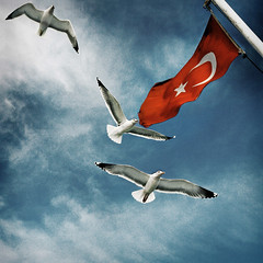 Universal Traveler (orgutcayli) Tags: sea sky cloud birds ferry turkey fly interestingness seagull istanbul explore journey retouch deniz vapur soe bosphorus marmara mart bogaz yolculuk orgutcayli turkiye orgutcayl gokyuzu