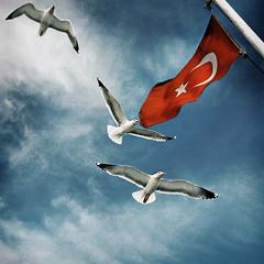 Universal Traveler (orgutcayli) Tags: sea sky cloud birds ferry turkey fly interestingness seagull istanbul explore journey retouch deniz vapur soe bosphorus marmara martı bogaz yolculuk orgutcayli türkiye örgütçaylı gökyüzü