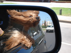 Pelos al viento (Rabinito) Tags: dog reflection wind perro animales
