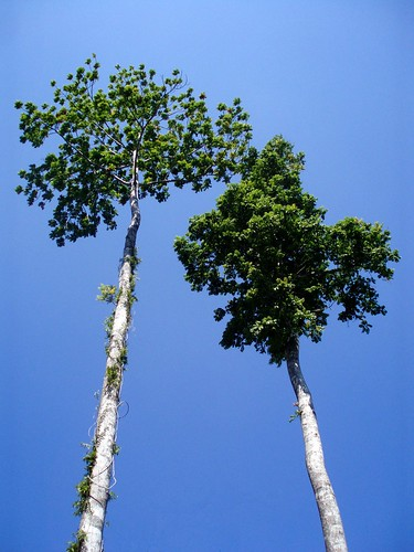 Trees in front of a crazy deep blue sky