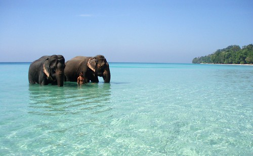2 elephants bathing, crystal clear sea, white sand, wild jungle...