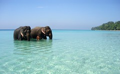 2 elephants bathing, crystal clear sea, white sand, wild jungle... - by Matthieu A.