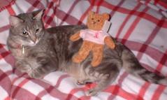 breast cancer bear on Xena