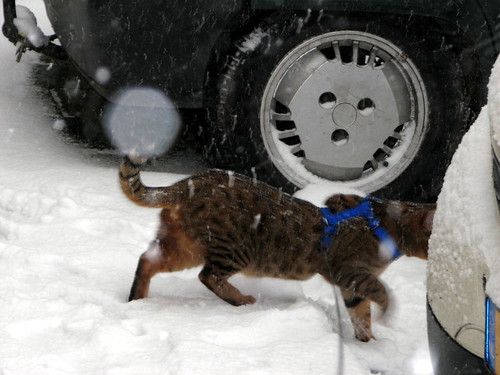 Ah, sneeuw!